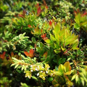 Ground plants, Peggy's Cove, Nova Scotia, Summer 2012