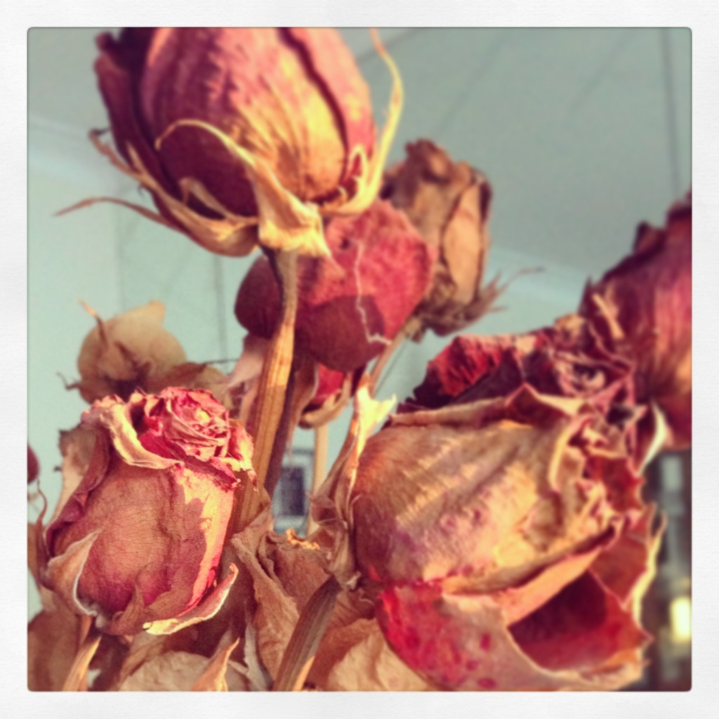 Dried roses, Montreal, Christmas Day 2012